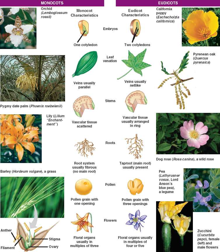Index of /Locked/media/ch30 10 Examples Of Monocot Plants