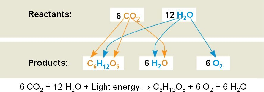 What is oxidized in the process of photosynthesis circuit synthesis tools